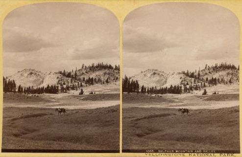 Yellowstone national park research paper?